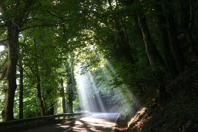 16-Strada-…-illuminata-da-madre-natura-in-un-bosco-della-Sila