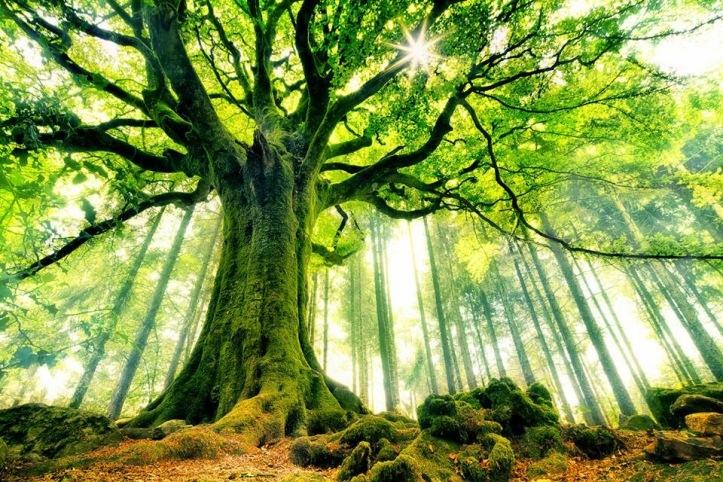 albero - Christophe Kiciak