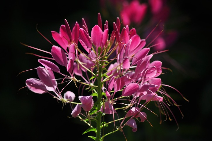 ratigo fiori rilassanti