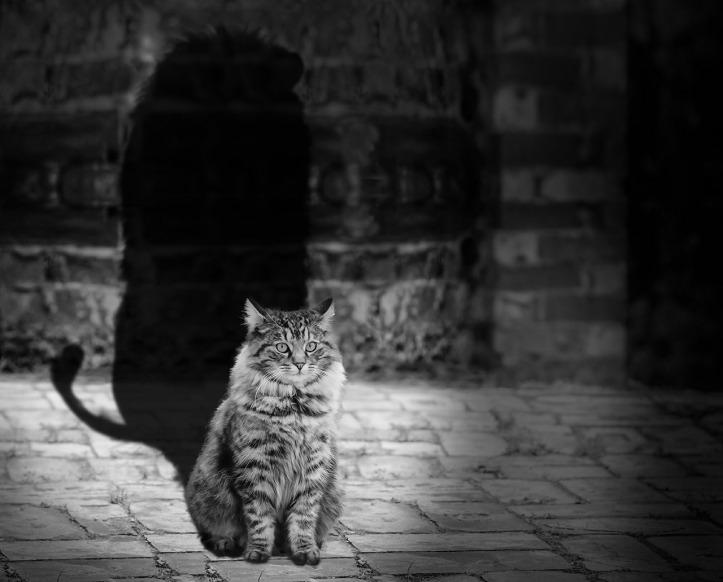 gatto e leone con ombra