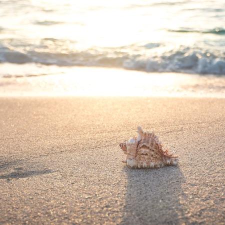 conchiglia e spiaggia pixabay