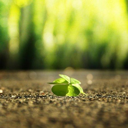 come tenere sempre un atteggiamento ottimista nei confronti della vita